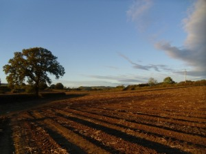 A winter scene on our Shropshire farm