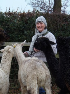 Jane Potts with her alpacas